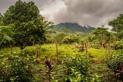 Ometepe vulcano landscape. View on the Ometepe vulcano in Nicaragua Royalty Free Stock Image