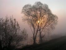 omfamnade trees Arkivfoto