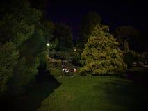 Omfamning av natten fotografering för bildbyråer