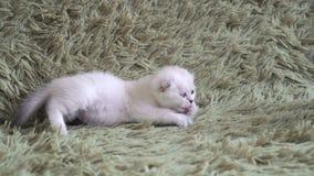 Omfamning för två gullig kattungar stock video
