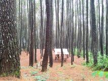 Omfattande pinjeskog som ses från en sida arkivbilder