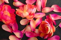 Omfloers document pioenbloemen Stock Foto