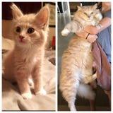 OMG er wuchs in ein Garfield! stockfotos