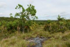Omge floden Guayabero fotografering för bildbyråer