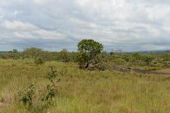 Omge floden Guayabero arkivbild
