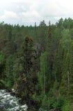 omgeende trees för flod arkivbild