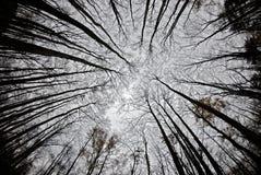 omgeende trees för höst Royaltyfri Foto