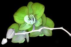 Omgekeerd beeld met orchidee Royalty-vrije Stock Afbeeldingen