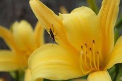 Omgekeerd insect op een bloem Royalty-vrije Stock Fotografie