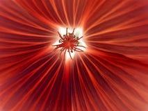 Omgekeerde macro van de bloem Royalty-vrije Stock Foto