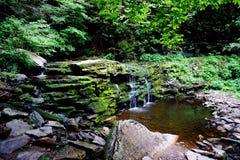Omgivet av naturen Arkivfoto