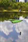 omgivet grönt damm för golf Royaltyfri Fotografi