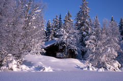 omgivna trees för kabin liten snow Arkivfoto