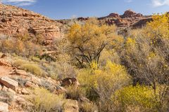 Omheining Canyon Autumn Color Stock Foto's