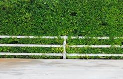 Omheining en groene bladachtergrond Stock Afbeelding