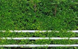 Omheining en groene bladachtergrond Royalty-vrije Stock Foto