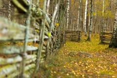 Omheining en weg in het hout royalty-vrije stock afbeelding