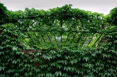 Omheining met druiven wordt verdraaid die royalty-vrije stock afbeelding