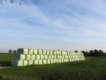 Omheining op het gebied in wind Nederland Stock Fotografie