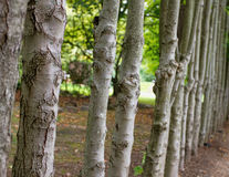 Omheining van Bomen Royalty-vrije Stock Afbeeldingen