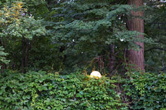 Omheining, volledig gekronkelde wilde druiven in de herfst Met boom en straatlantaarn Royalty-vrije Stock Fotografie