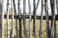Omheinings oude houten stokken als achtergrond Royalty-vrije Stock Fotografie