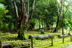 Omheiningsbamboe die de waterval van Si Dit, Phetchabun lopen royalty-vrije stock fotografie