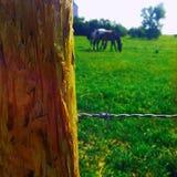 Omheiningspost met paarden Stock Afbeelding