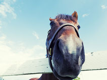 Omhoog dicht paard Stock Foto's
