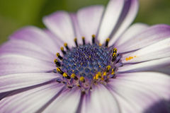 Omhoog dichte bloem Royalty-vrije Stock Afbeeldingen
