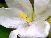 Omhoog gesloten bloem Royalty-vrije Stock Afbeeldingen