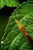 Omhoog gesloten op insect. Royalty-vrije Stock Fotografie