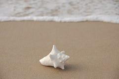 Omhoog gewassen op het strand Stock Foto's