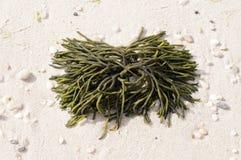 Omhoog gewassen op het strand Royalty-vrije Stock Afbeeldingen