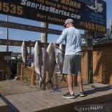 Omhoog hangend vissen op een visreis vers worden gevangen die Stock Foto