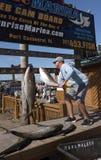 Omhoog hangend vissen op een visreis vers worden gevangen die Royalty-vrije Stock Foto's