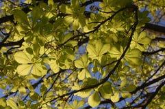 Omhoog het kijken om groene bladeren te zien royalty-vrije stock foto