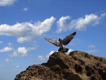 Omhoog het vliegen van vogel Royalty-vrije Stock Afbeelding