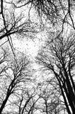 Omhoog hoge Forestshadows Royalty-vrije Stock Afbeeldingen