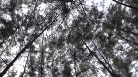 Omhoog kijkend in bos, camera die snel roteren stock video
