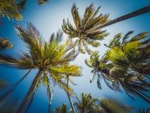 Omhoog kijkend, hemel en palmen - het onscherpe concept van de de zomervakantie royalty-vrije stock foto's