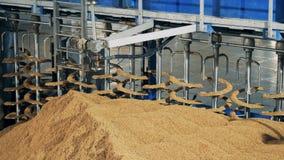 Omhoog sluit de sorterende korrel van de fabrieksmachine, Het materiaal van de moutverwerking bij moutinstallatie, brouwerij stock video