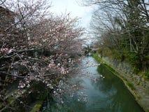 Omihachiman-Burggraben im Frühjahr, Sakura Begin To Bloom Stockfotografie