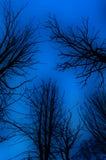Ominöse bloße Bäume stockfotos