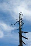 Ominöser Baum Lizenzfreie Stockbilder