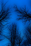 Ominous bare trees. A view looking upwards toward the early evening sky through bare, spooky trees stock photos