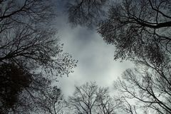 An ominous forest. Graphic Resources Backgrounds tree forest royalty free stock images