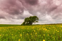 Ominous storm clouds and canola fields stock photo