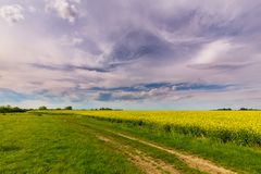 Ominous storm clouds and canola fields royalty free stock photography