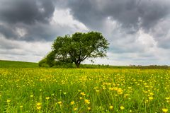 Ominous storm clouds and canola fields stock photography
